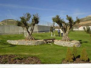Jardín con Olivos
